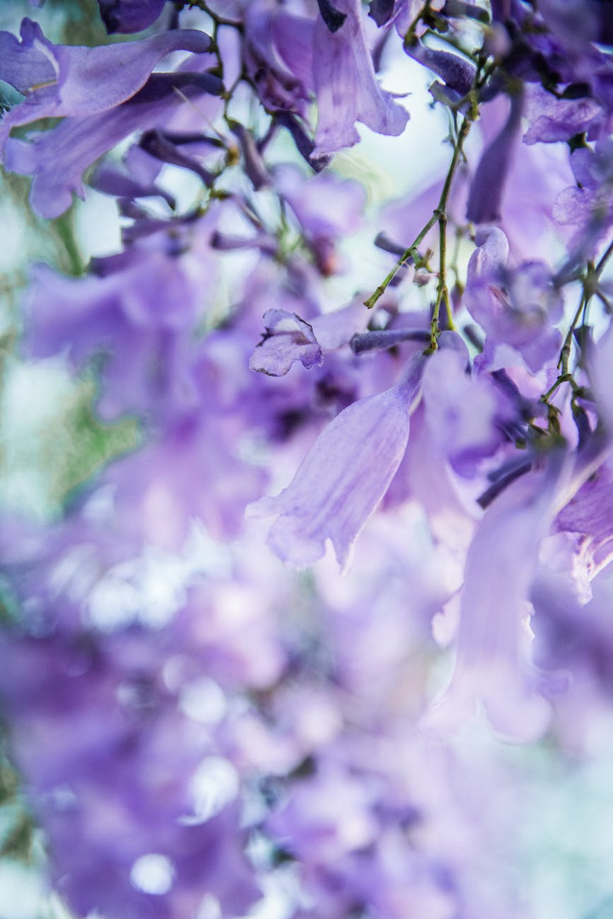 close up photo of purple flowers